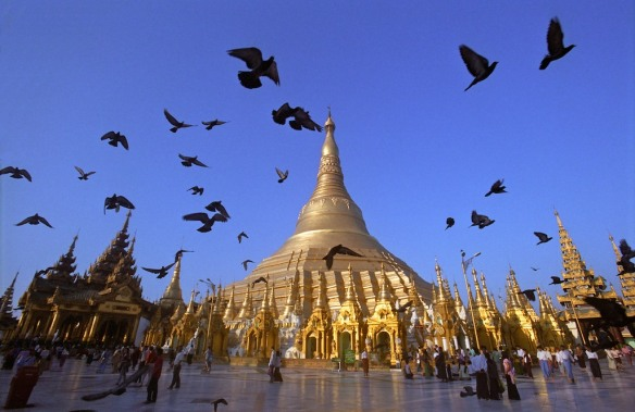 Shwedagon birds
